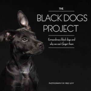 The 'Black Dogs Project' Sheds Light on Black Dog Syndrome — Vantage — Medium