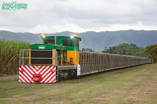 Sugar Cane Train North Queensland Australia