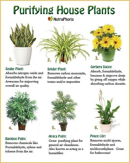 Air Purifying Plants For Bedroom: Air Purifying Indoor Plants