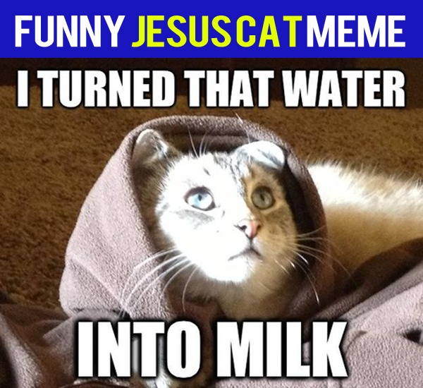 099516926ca155fb0b04e7e92f021f21 animal memes funny animal 38 best praise the lord!!! images on pinterest funny stuff, funny