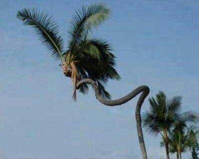 Kool tree