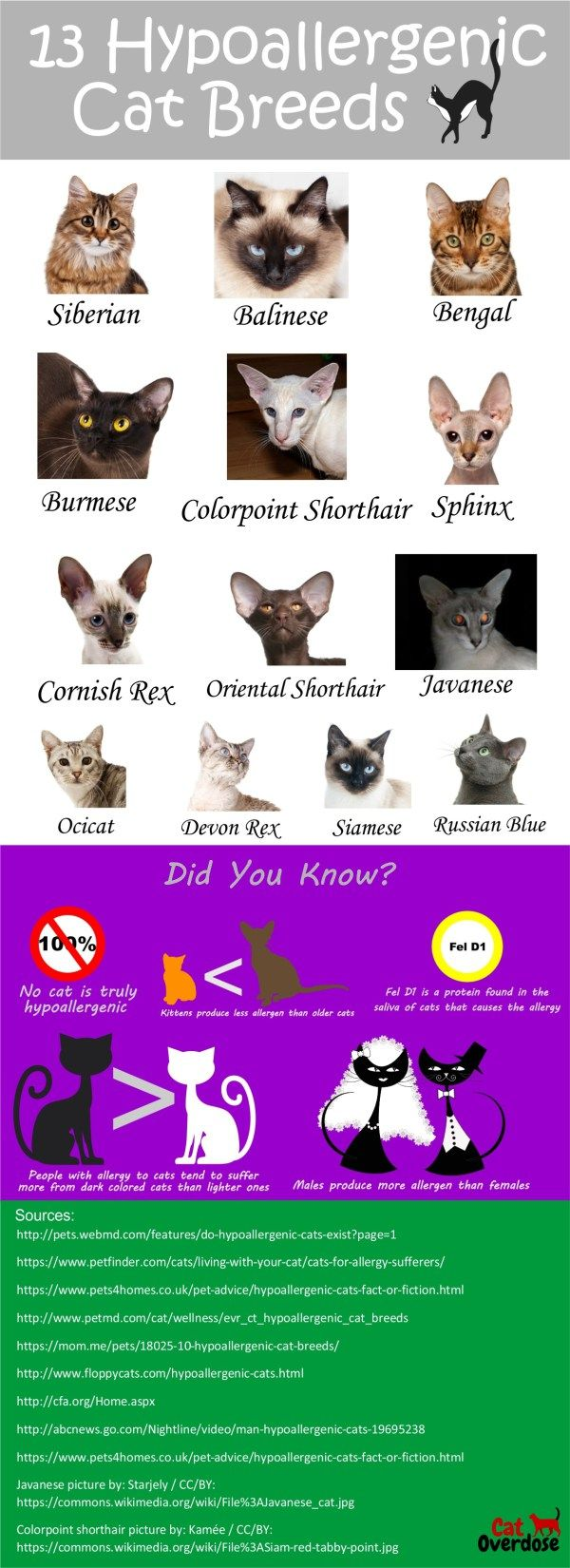 Love cats but allergic to them? check this 12 hypoallergenic cat breeds.. you might find one that is right for you!  https://catoverdose.com/hypoallergenic-cat-breeds/