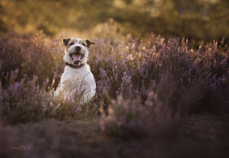 Sunset - More dog pictures: https://www.facebook.com/SnapDogPL/
