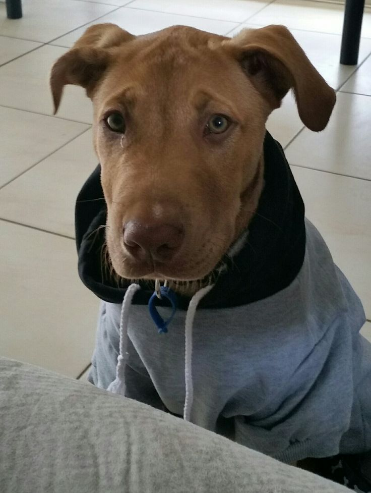 Ninja looking Gansta in his new Game of Bones hoodie