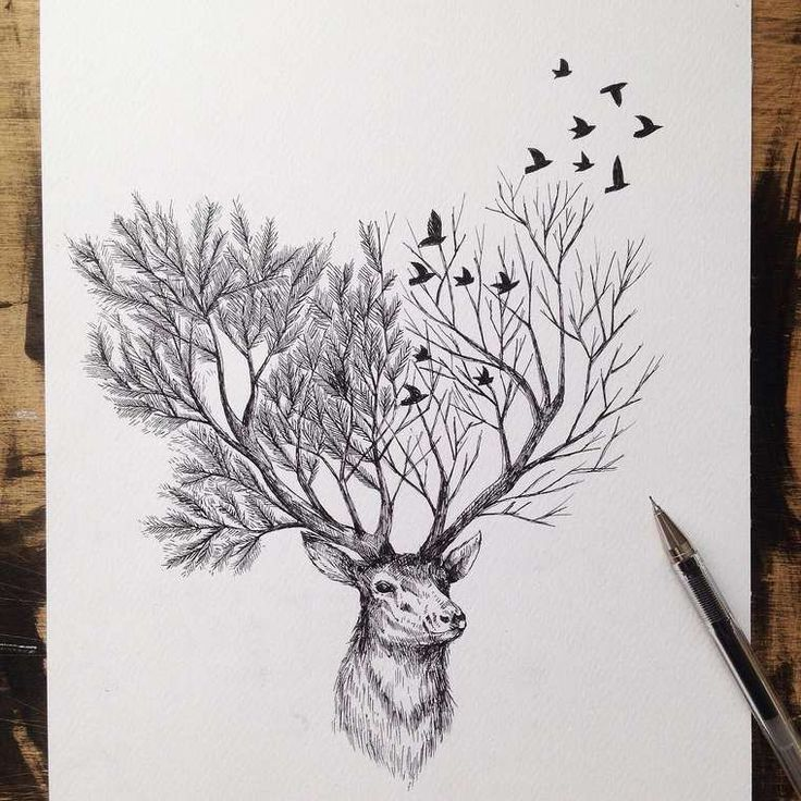 Ms de 25 ideas increbles sobre Dibujos de la naturaleza en