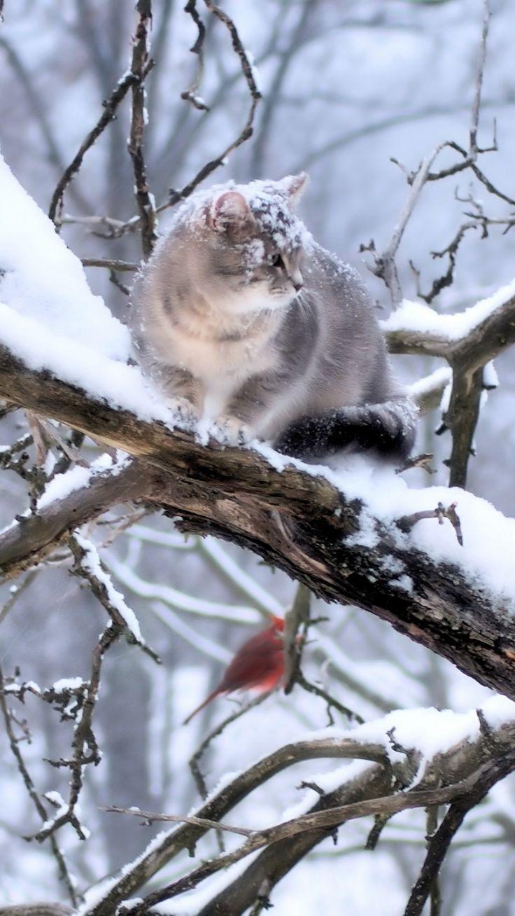 https://wallpaperscraft.com/download/cat_branch_tree_snow_winter_59741/1080x1920