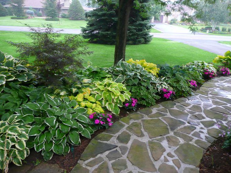 151 Best Images About Plants On Pinterest Hedges