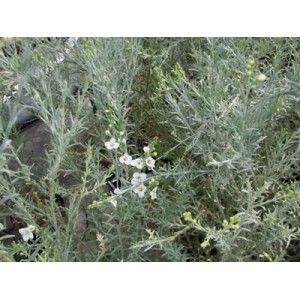 Les 25 meilleures id es de la cat gorie feuilles grises sur pinterest literie gris fonc - Couper les feuilles en fin de floraison ...