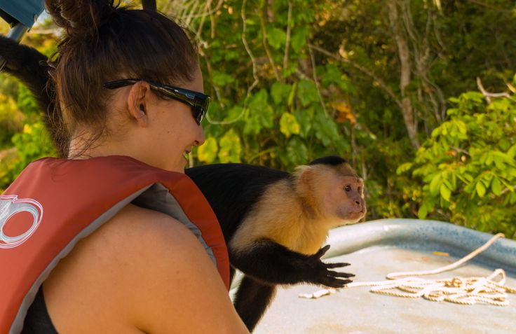 Monkey Around in the Gamboa Rainforest with TL Travel http://www.tltraveltrips.com/