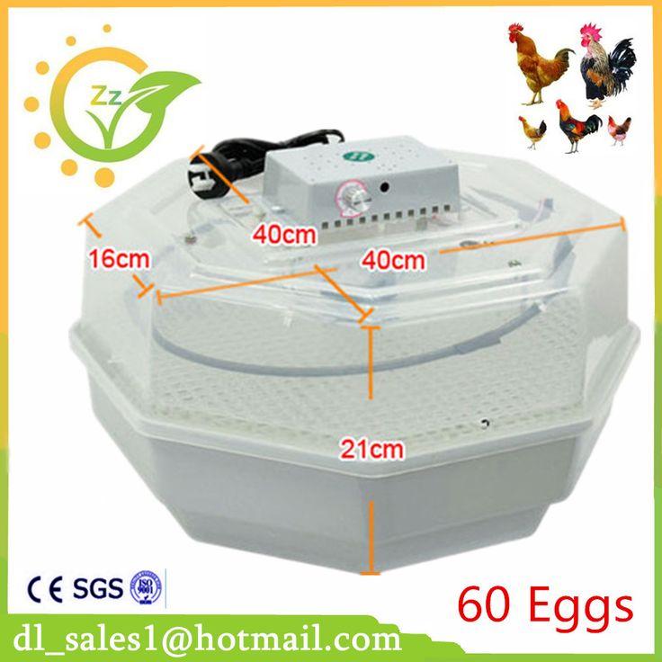 60 eggs