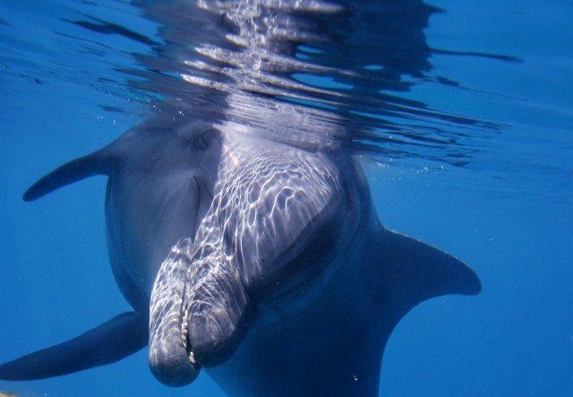 Az egyetlen hely a világon, ahol a delfinek... » Izraelinfo  #eilat