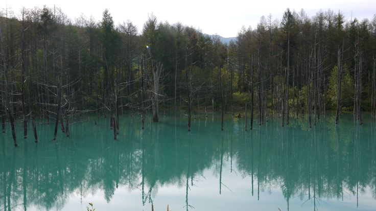 Blue Pong in Biei. Japan travel tips on http://ajourneyintotheunknown.com/things-1-month-japan-itinerary/.