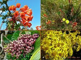 flora del mundo - Volcán Irazú, Costa Rica  ( Flora )