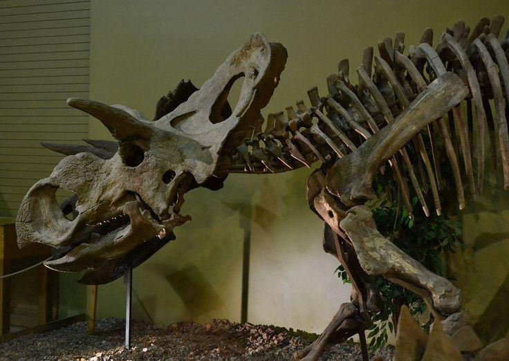 19 Best Dinosauria 1 Medusaceratops Images On Pinterest