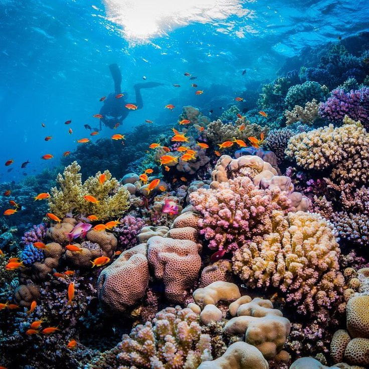 17 Best Ideas About Coral Reef Biome On Pinterest