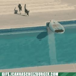 Funny Animal Gifs - HANG TEN, DUUUUUDE