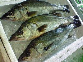 夏の旬魚をさばいて美味しく食べましょう(^-^)