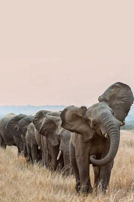 AMARA ELEPHANT BLOG!: SAVE OUR MOMS AND DADS