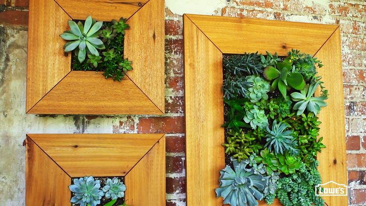 How to Make Your Own DIY Succulent Wall Garden