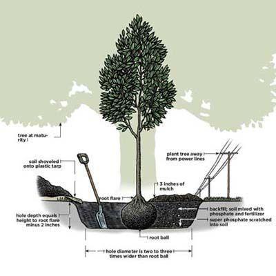 tree bush diagram best 25+ tree planting ideas on pinterest