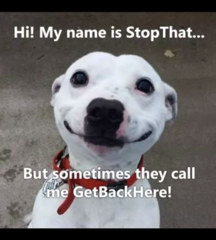 TOP-15 Super Funniest Animals Memes For This Day
