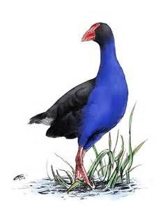 104 best The Perfect Pukeko images on Pinterest | Nz art ...