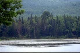 En su límite meridional, y en particular en América, el bosque boreal se diversifica mucho, incrementa su biomasa e incorpora algunos árboles caducifolios.