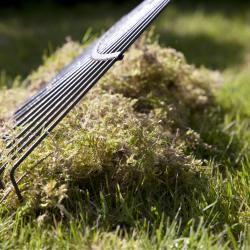 Best So erneuern Sie Ihren Rasen ohne Umgraben Moos EntfernenGarten