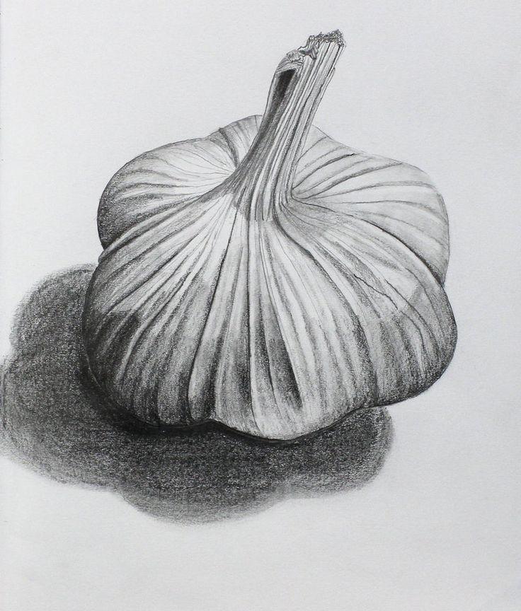 Картинка чеснок карандашом