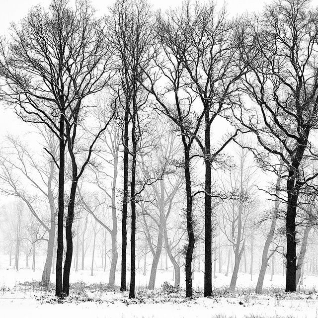 Winter trees in 2019 | Photography | Winter trees, Tree ...