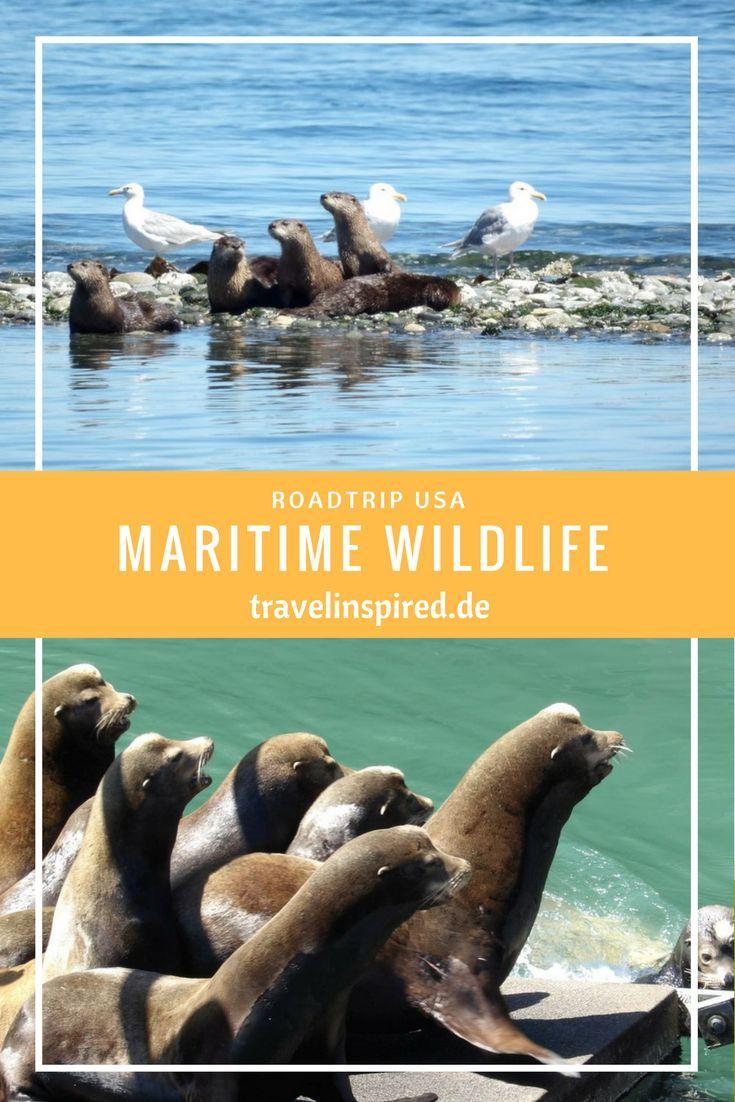 Otter, Seelöwen, Wale und viele weitere tolle Tiere leben an der Küste von Washington und Oregon, USA