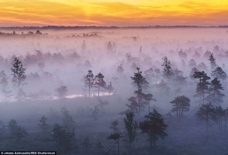 Swirling haven: Trees poke through the dense fog under a spectacular orange sunrise on the...