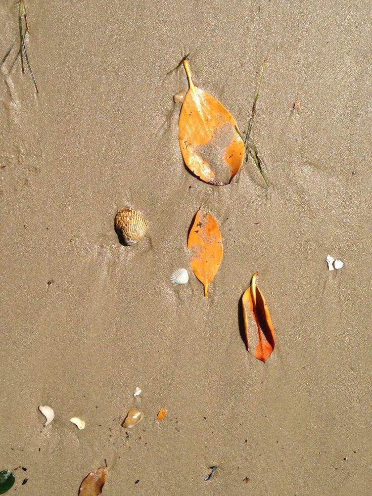 Colours on the Beach  ~  Maroochydore SE Queensland Australia.