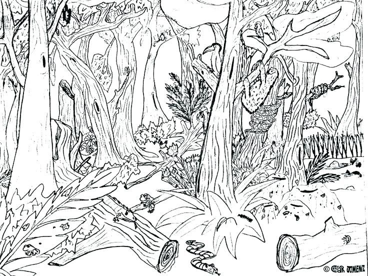 Animal Habitat Coloring Pages Animal Habitat Coloring Pages Animal Habitat Coloring Pages Jungle Coloring Pages Zoo Animal Coloring Pages Animal Coloring Pages
