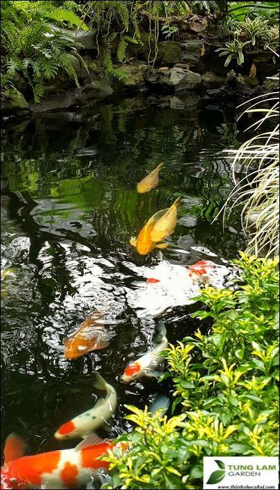 Hồ cá Koi Yên Sở đẹp
