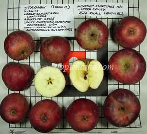 Stayman apple identification