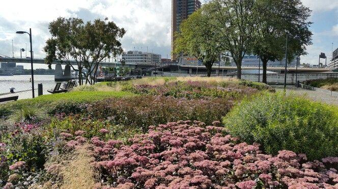 Beplanting groen en paars, Rotterdam