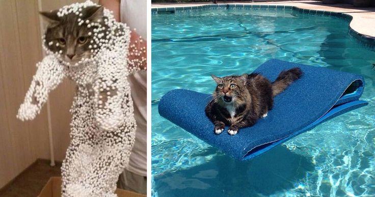 20 Gatos Que Lamentaram Suas Escolhas. Prepare-se Para Rir Muito!