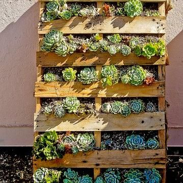 Succulents display beautifully in an upcycled pallet