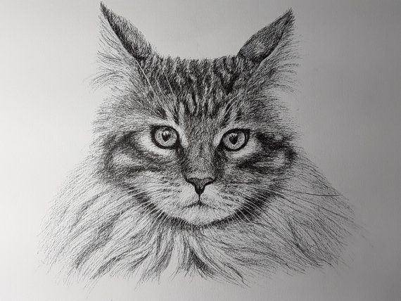 Custom Cat Portrait  Pet Memorial Personalized Cat Drawing Picture to Portrait Cat Sketch Cat Grief Gift Pet Loss Cat Mourning Sympathy Gift