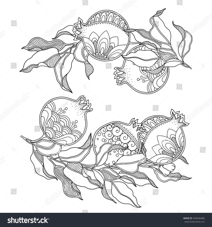 Vector set Branch with pomegranate fruits and leaves in doodle style. Nature, ornate, decorative, floral design elements. Black and white monochrome frame. Zentangle hand drawn coloring book page