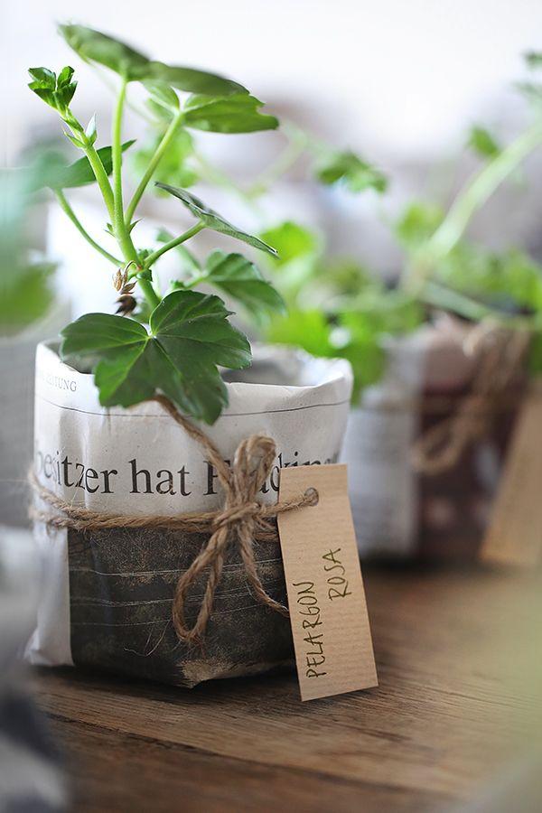 DIY Paper pots