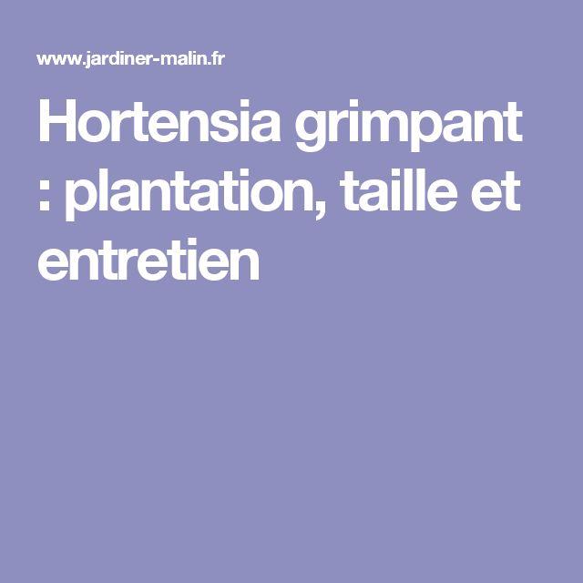 Hortensia grimpant : plantation, taille et entretien