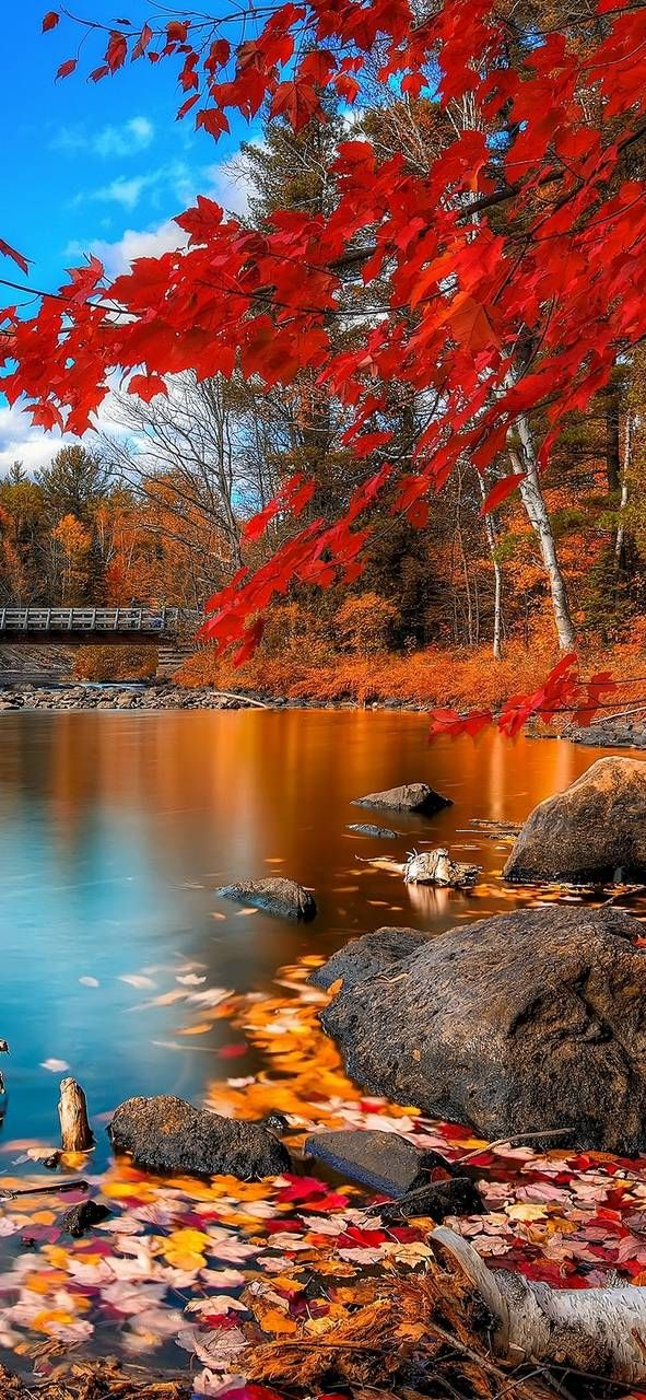 Nature Wallpaper Download In 2020 With Images Cool Landscapes Nature Wallpaper Autumn Wallpaper Hd