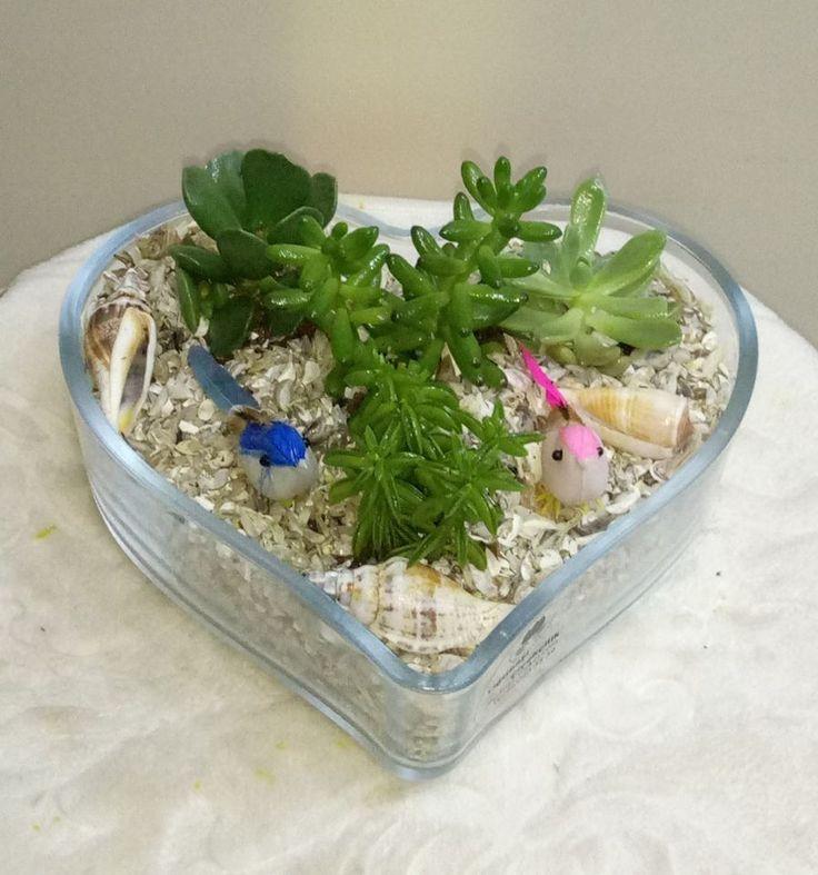 kalp cam da sukulentler deniz kabulları ve küş ile ısparta yiğitbaşı çiçekçilik sizin için hazırlar sevdiklerinize ulaştırır