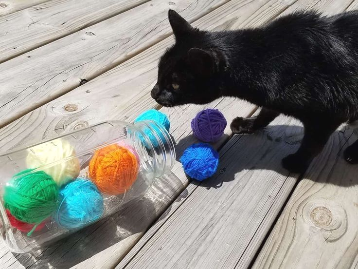 The Easiest No Sew Diy Cat Toy With A Full Tutorial Every Cat Loves These Homemade Cat Toys And They Re So Easy To Make Diy Cat Toys Cat Toys Diy Pet Toys