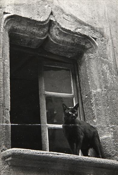 Brassaï - Cat in a window, c. 1938