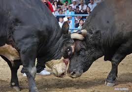 「闘牛」の画像検索結果