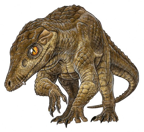 Prehistoric Crocodile Pictures:  Araripesuchus looks like a crocodile caught halfway into becoming a theropod dinosaur--not a stretch, since both dinosaurs and crocodiles evolved from the same archosaur stock tens of millions of years earlier.