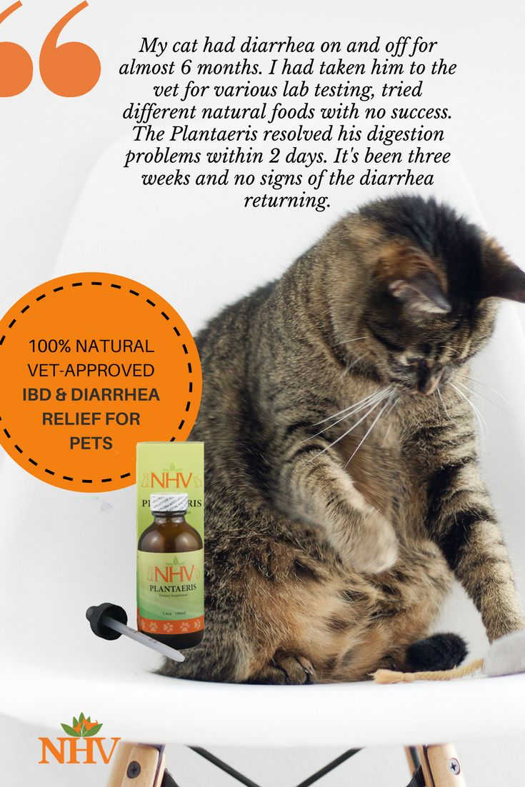 Plantaeris for cats Cat diarrhea, Cats, Cat diet